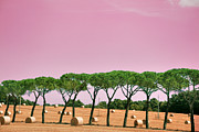 Grosseto Framed Prints - Tuscany Maremma Countryside Framed Print by (c)paolodelpapa