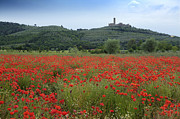 Hilltown Photos - Tuscany Poppies 1 by Al Hurley