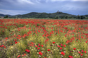 Hilltown Framed Prints - Tuscany Poppies 2 Framed Print by Al Hurley