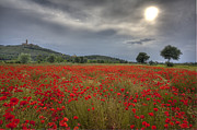 Hilltown Framed Prints - Tuscany poppy field Framed Print by Al Hurley