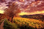 Vineyard Art Posters - Tuscany Sunset Vineyard San Gimignano Poster by Chase Lindberg