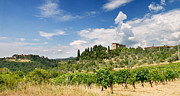 Blue Grapes Posters - Tuscany Villa in Umbria Italy  Poster by Ulrich Schade