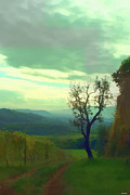 Beautiful Landscape Photos Digital Art Acrylic Prints - Tuscany vineyard  Acrylic Print by Tom Prendergast