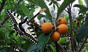 Eric Kempson - Tutti Frutti