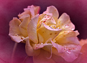 Hybrid Metal Prints - Tutti Frutti Rose Metal Print by Richard Cummings