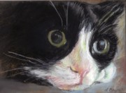 Animal Portrait Pastels - Tuxedo Cat by Linda Bryant