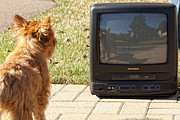 Dog Photo Framed Prints - TV Watching Dog Framed Print by Susan Stone