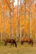 Colorful Trees Art - Tw Horses Grazing in the Autumn Air by James Bo Insogna