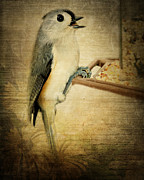 Textured Bird Posters - Tweet Tweet Poster by Kathy Jennings