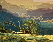 Victoria Winningham - Twigs and Canyon