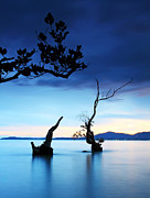Anusorn Phuengprasert Nachol Prints - Twilight And Dead Tree In The Sea  Print by Anusorn Phuengprasert nachol