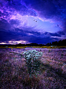 Environement Posters - Twilight Bouquet Poster by Phil Koch