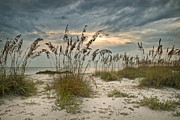 Sea Oats Photo Framed Prints - Twilight Sea Oats Framed Print by Steven Sparks