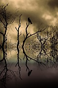 Bare Trees Prints - Twilight Print by Sharon Lisa Clarke
