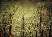 Olive Green Posters - Twilight Snow Poster by Lisa Russo