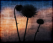 Desert Pyrography Metal Prints - Twilight thistle Metal Print by Tammy Espino
