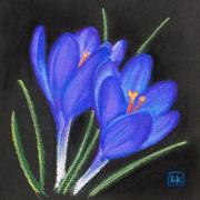 Flower Blooms Pastels Prints - Twin crocus Print by Lisa Kretchman