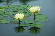 Water Lily Photos - Twin Reflections by Suzanne Gaff