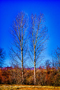 Denver Framed Prints - Twin Trees at South Platte Park Framed Print by David Patterson