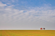 Field. Cloud Prints - Twin Trees In Field Print by Michael Kohaupt