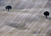 Crop Lines Art - Twins apart  by Heiko Koehrer-Wagner