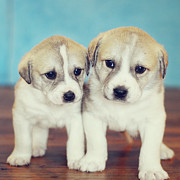 Standing Posters - Twins Puppies Poster by Christina Esselman
