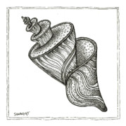 Shell Drawings - Twirly Shell by Stephanie Troxell