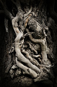 Tree Art Print Art - Twisted Dreams by Mary Machare