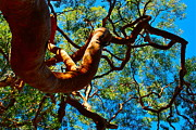Big Tree Photos - Twisted into the Air by Dorota Nowak