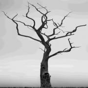 Branches Digital Art Posters - Twisted Poster by Mike McGlothlen