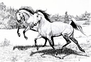 Horse Images Drawings Prints - Two Arabians frolicking in Pasture Print by Cheryl Poland