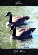 Geese Digital Art Posters - Two... As One Poster by Cristophers Dream Artistry