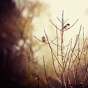 Warm Tones Framed Prints - Two Birds in a Tree Framed Print by Katya Horner