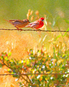 Red Birds Posters - Two Birds On A Wire Poster by Wingsdomain Art and Photography