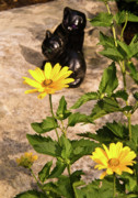 Pleasant Remembrances Posters - Two Black Cats and False Sunflowers Poster by Douglas Barnett