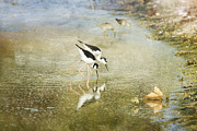 Susan Gary - Two Black-Necked Stilts...