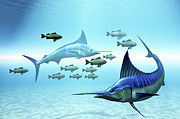 School Of Fish Digital Art - Two Blue Marlins Circle A School by Corey Ford