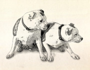 Staffie Prints - Two Bull Terriers Print by Michael Tompsett