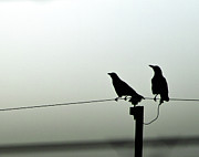 Animals Photos - Two Crows by Ka_tate