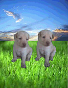Puppies Mixed Media - Two Cute Puppies by Arvindh Swami
