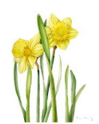 Yellow Daffodils Art Originals - Two Daffodils by Fran Henig