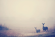 Two Deer Framed Prints - Two Deer in Fog Framed Print by Katya Horner