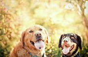 Panting Dog Prints - Two Dogs Print by Jessica Trinh