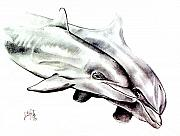 Dolphin Drawings Framed Prints - Two Dolphins Framed Print by John Keaton