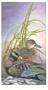 Waterfowl Paintings - Two Ducks by Mary Jo  Zorad