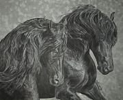 Gail Finger - Two Friesian Stallions