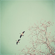Birch Tree Metal Prints - Two Geese Migrating Metal Print by Laura Ruth