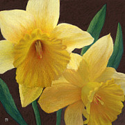Theresa Evans - Two Golden Daffodils
