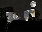Hepheastus Prints - Two Great Egrets  Print by Eric Kempson