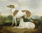 Pedigree Posters - Two Greyhounds in a Landscape Poster by Charles Hancock